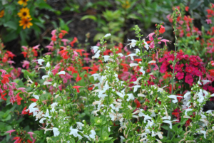 Pollinator Habitat full of flowers